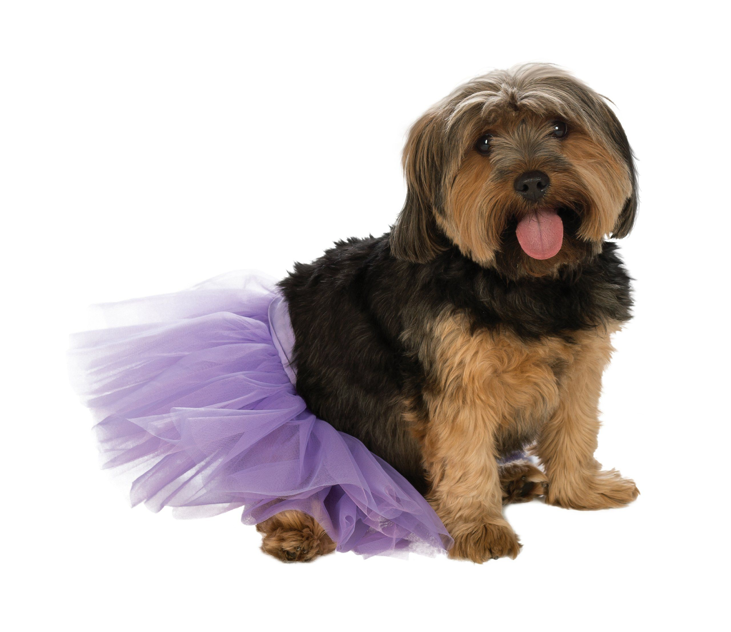 Rubie S Pet Tutu Purple Small Medium Check This Awesome Product By Going To The Link At The Image As An Amazon Associ In 2020 Dog Dresses Pets Small Dog Clothes