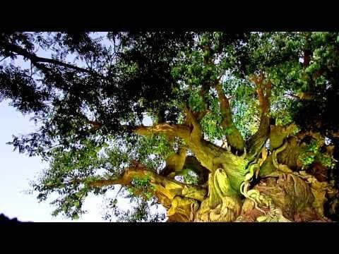 65 Sunset On Tree Of Life Disney S Animal Kingdom 40min Atmosphere Youtube With Images Animal Kingdom Disney Animal Kingdom Park Animal Kingdom
