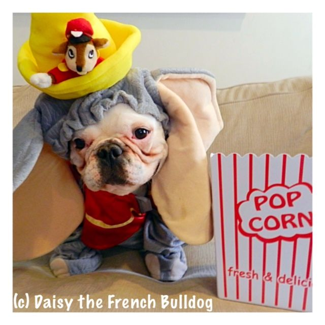 Daisy The French Bulldog French Bulldog Dumbo Characters