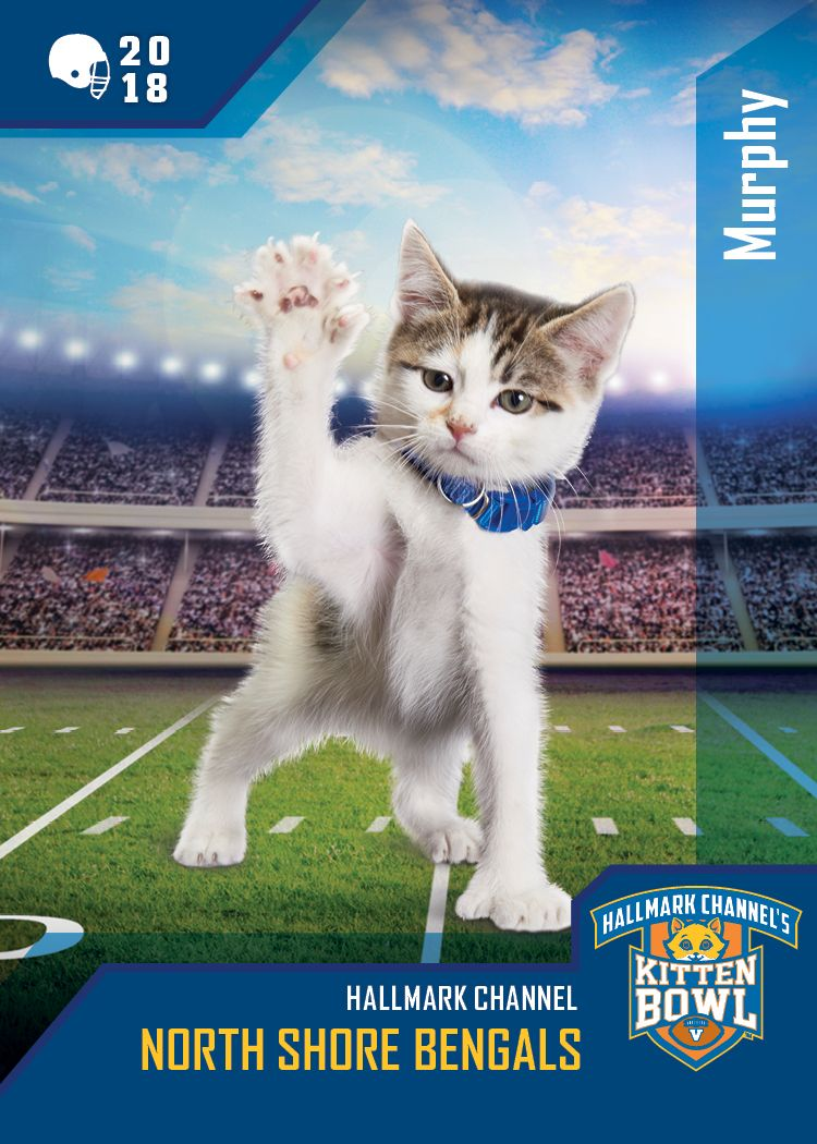 Kitten Bowl V Furrsome Defensive Tickle Murphy Is A Fierce Pass Blocker For The North Shore Bengals Which Team Are Yo Kitten Bowls Kitten Hallmark Channel