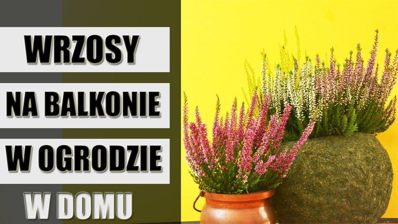 Wrzosy W Ogrodzie Na Balkonie I W Domu Home Decor Decals Plants Home Decor