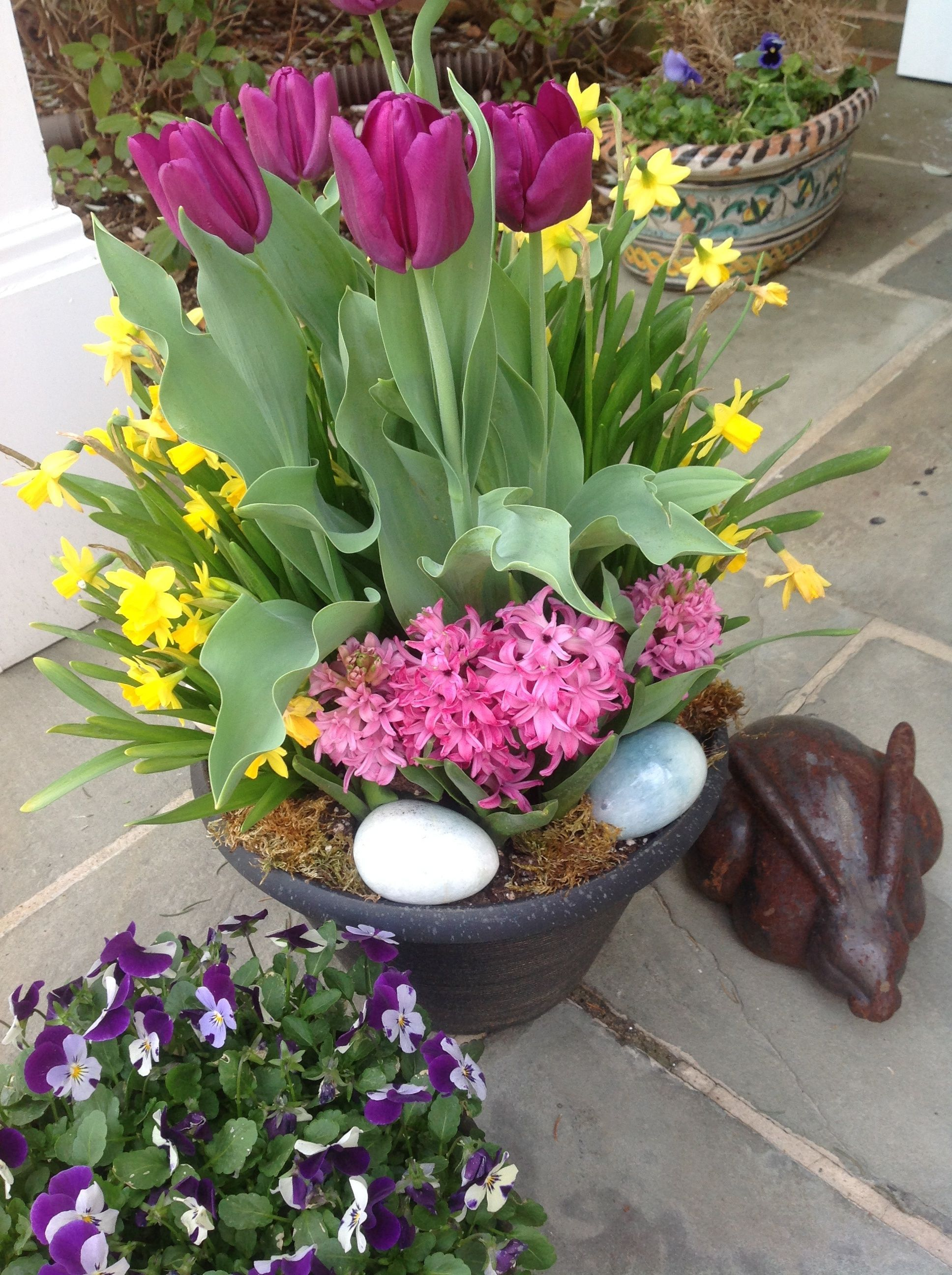 Gorgeous Spring Bulbs spring easter outdoors flowers bulbs spring ...