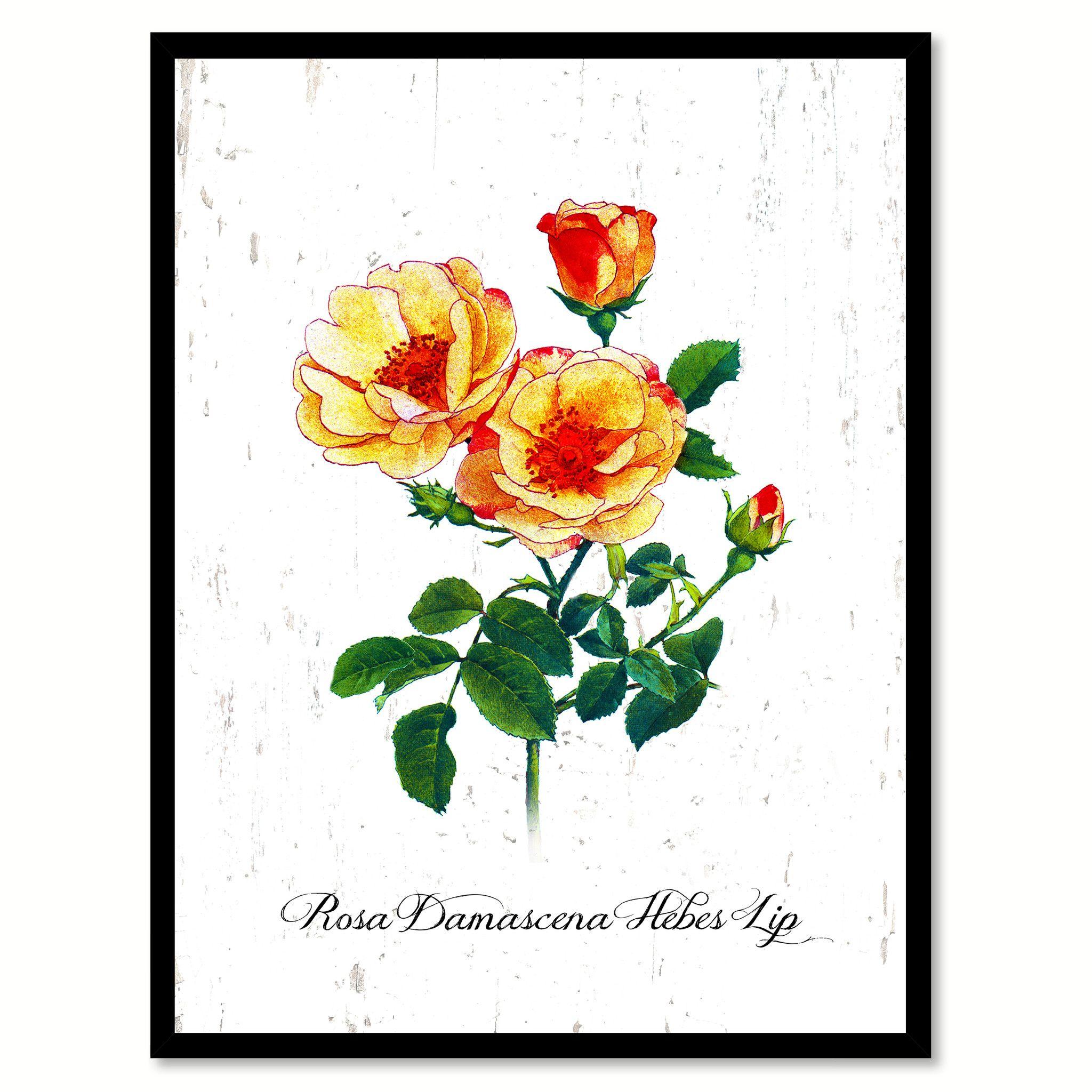 Yellow Damascena Hebes Lip Rose Flower Framed Canvas Print Gift Ideas Home Décor Wall Art