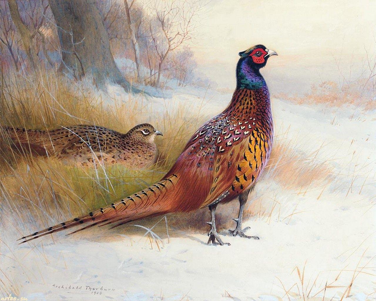 фэнтези картинки фазаны отражает образ жизни
