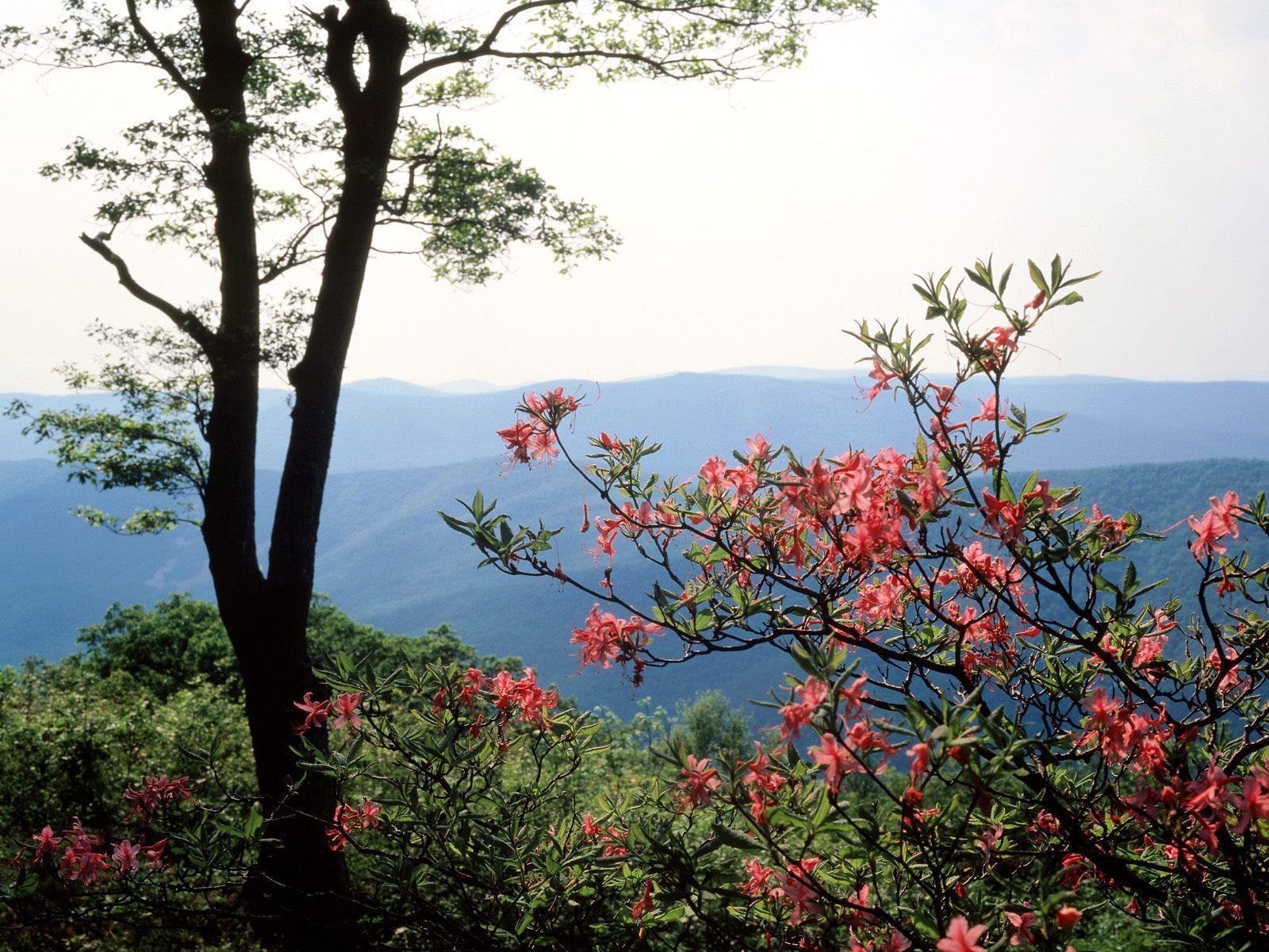Blue Ridge Mountains, North Carolina Blue ridge