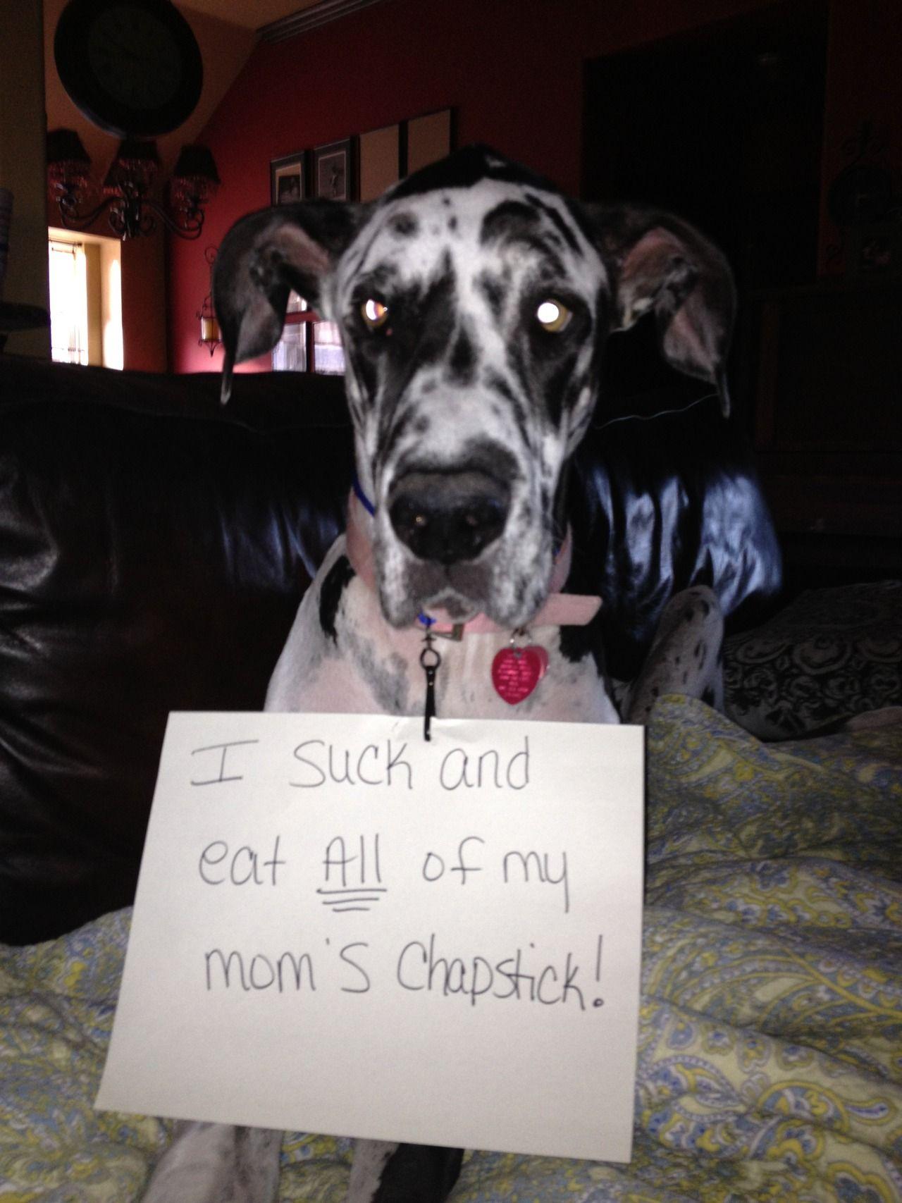 Pin on Dog Shame