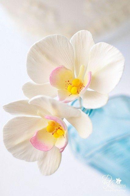 Phal Orchid Hair4 Orchidee Planter Des Fleurs Et Photo Orchidee