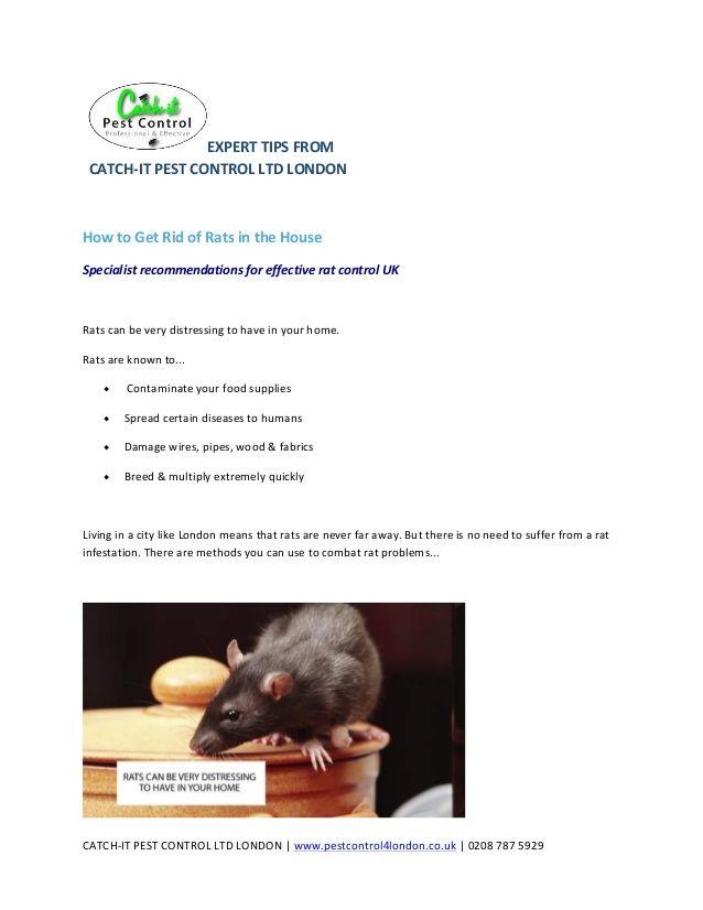 http://www.pestcontrol4london.co.uk/rat-pest-control ...