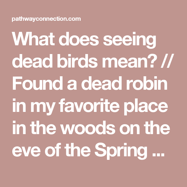 What Does Seeing Dead Birds Mean Found A Dead Robin In My