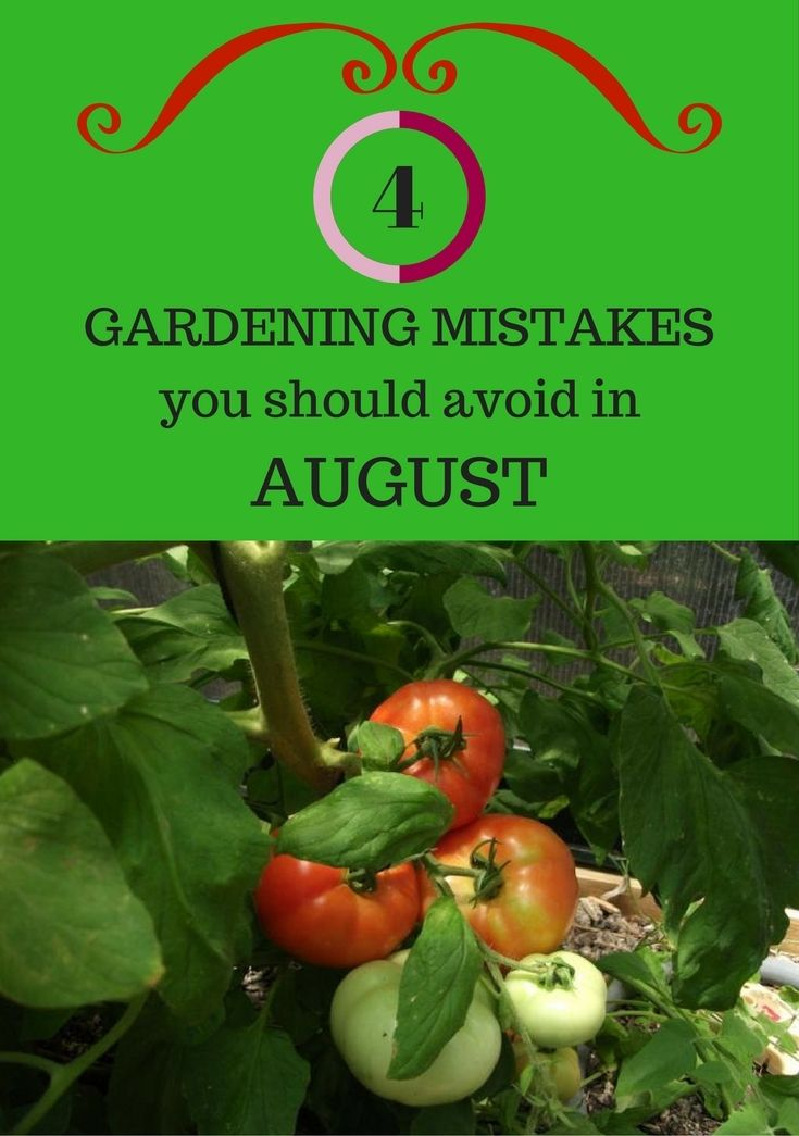 4 Gardening Mistakes We Should Avoid In August - BestGardenTips.com
