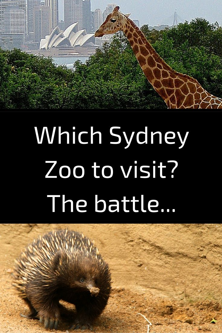 Which Sydney Zoo To Visit Australia Taronga Or Wildlife Park Or Featherdale Australia Travel Wildlife Park New South Wales