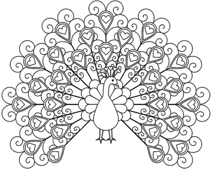 best peacock printable coloring pages for kids boys and girls