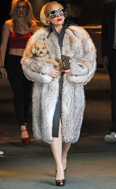 d128f1407ea1 Lady GaGa wearing a feathered badger fur coat. This fur makes a beautiful  trim as collar or cuffs on cloth and leather garments.  littlemonsters