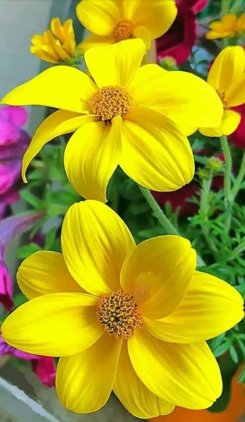 Yellow Beautiful Things Pinterest Beautiful Things And Flowers