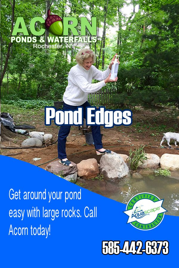 Add Your Bacteria And Navigate All Around The Pond When 400 x 300