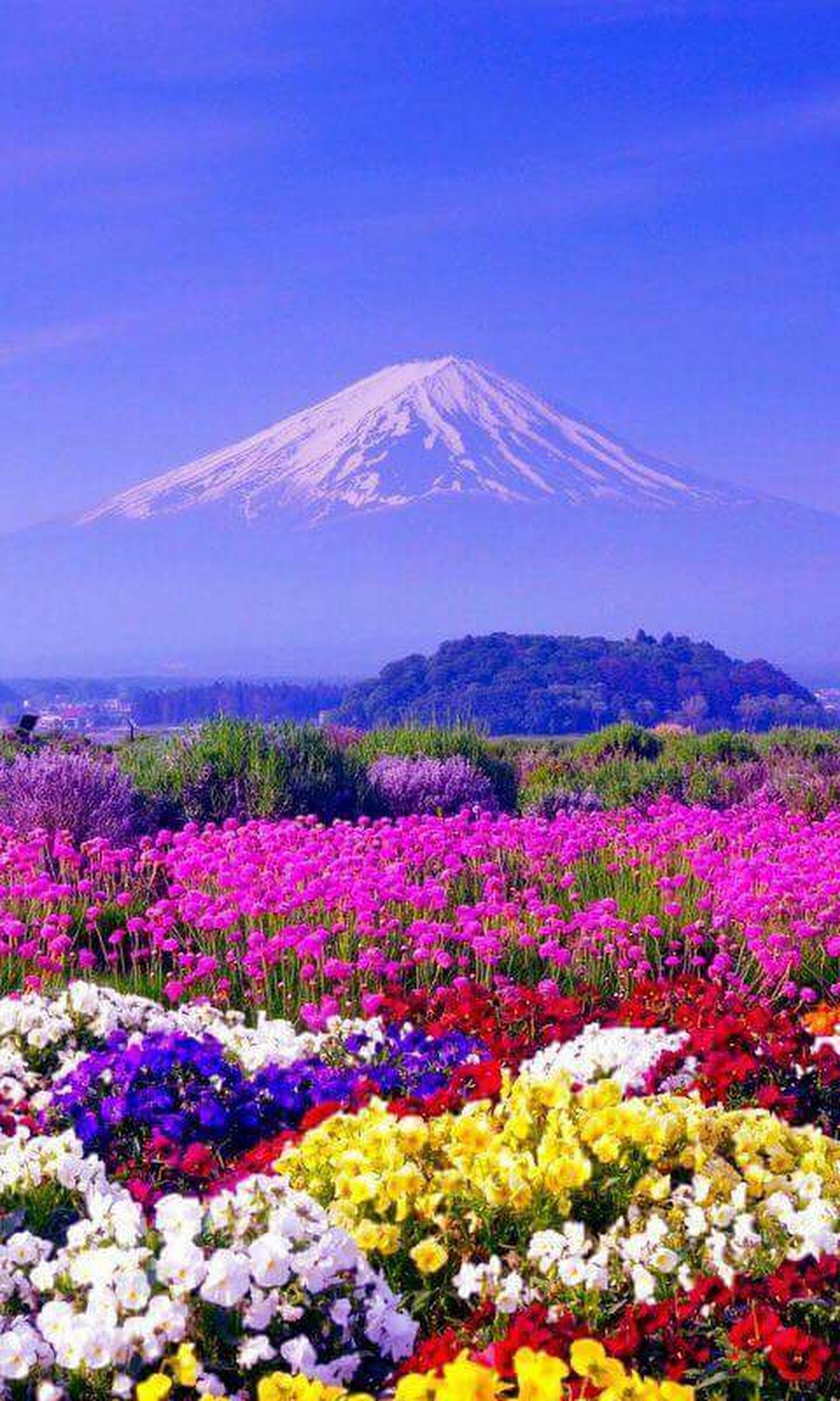 The beauty in colourful of flowers garden with a great view of fuji the beauty in colourful of flowers garden with a great view of fuji mountain background of japan halimah nur google izmirmasajfo