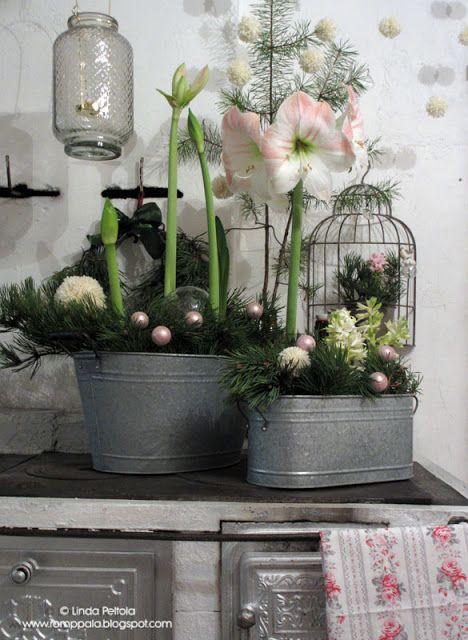 Christmas flower arrangement with amaryllis & hyacinths Romppala - kotoilua ja puutarhanhoitoa: Joulukukkia keittiössä