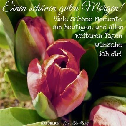 Photo of guten morgen bilder schön – Gb Bilder • GB Pics – Gästebuchbilder