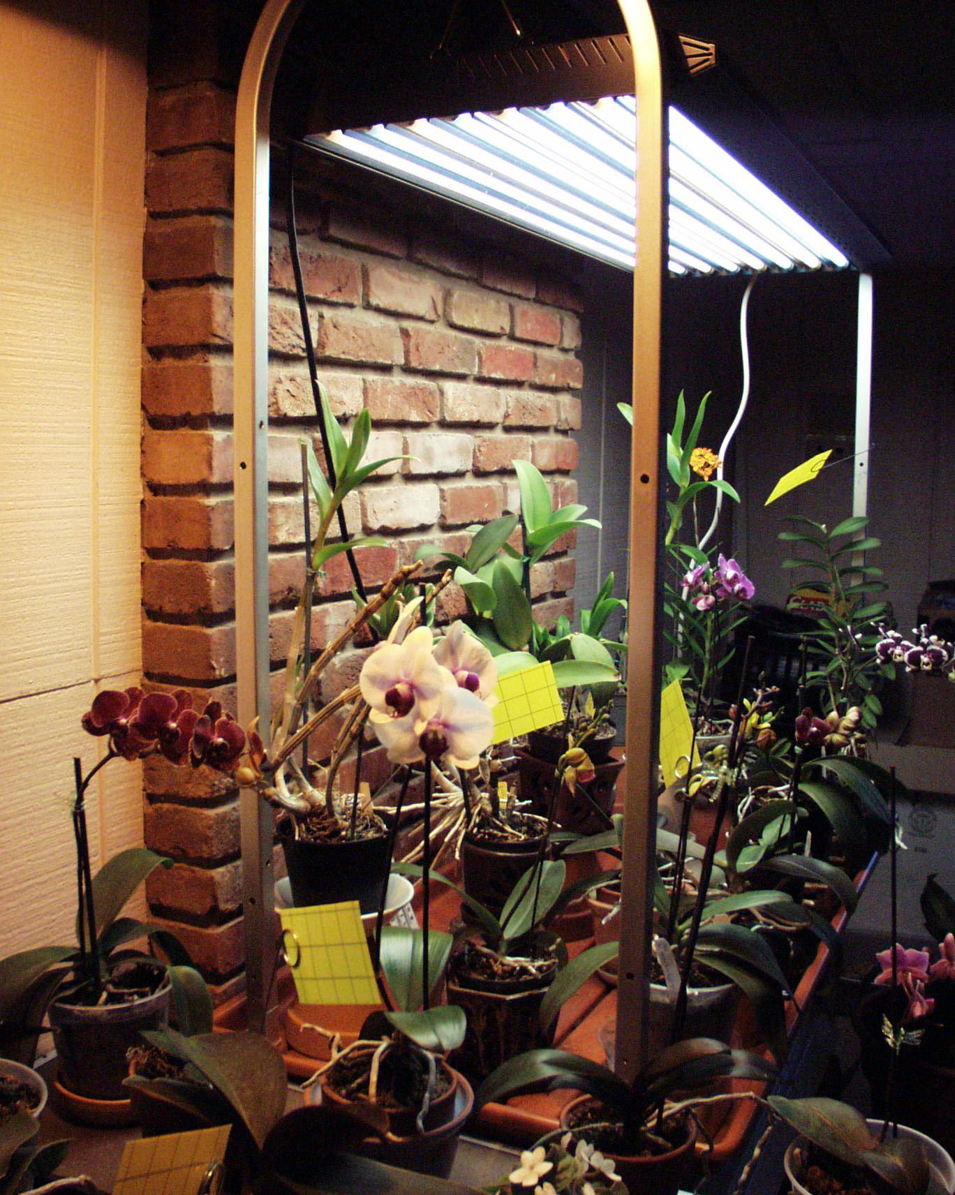 Orchid collection under t5 high output fluorescent grow Plant grow lights