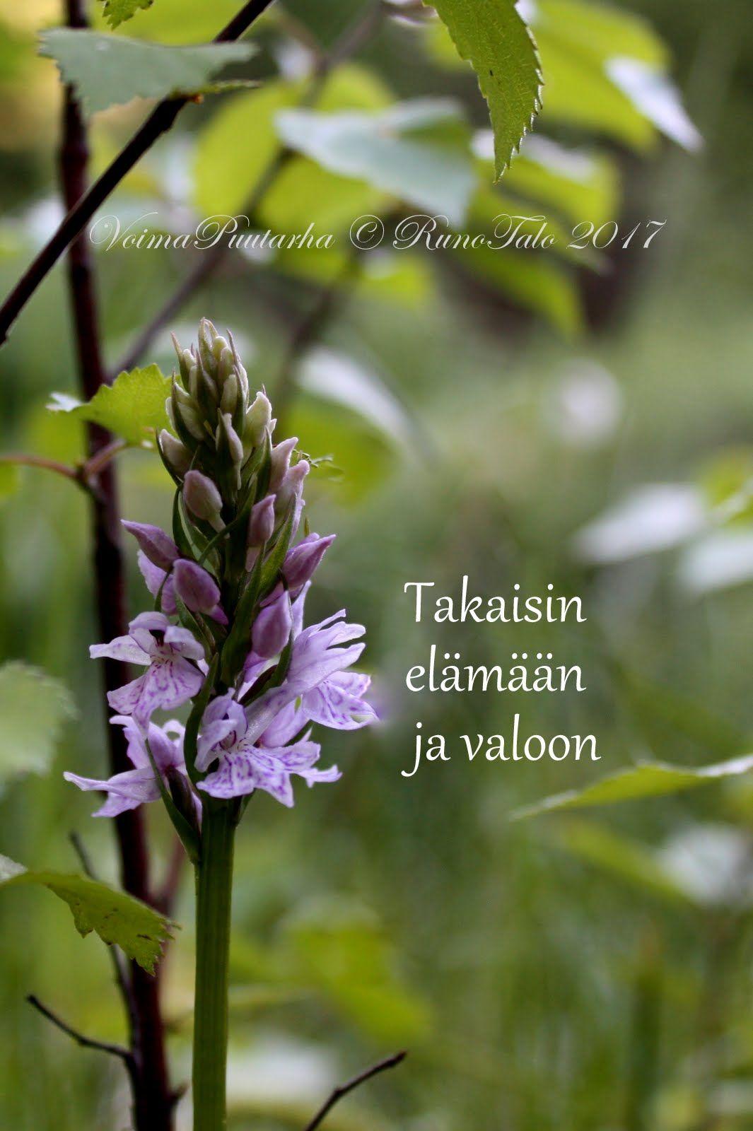 voimakortti Takaisin elämään ja valoon - maariankämmekkä voimametsän lammella Runotalon tontin läheisyydessä
