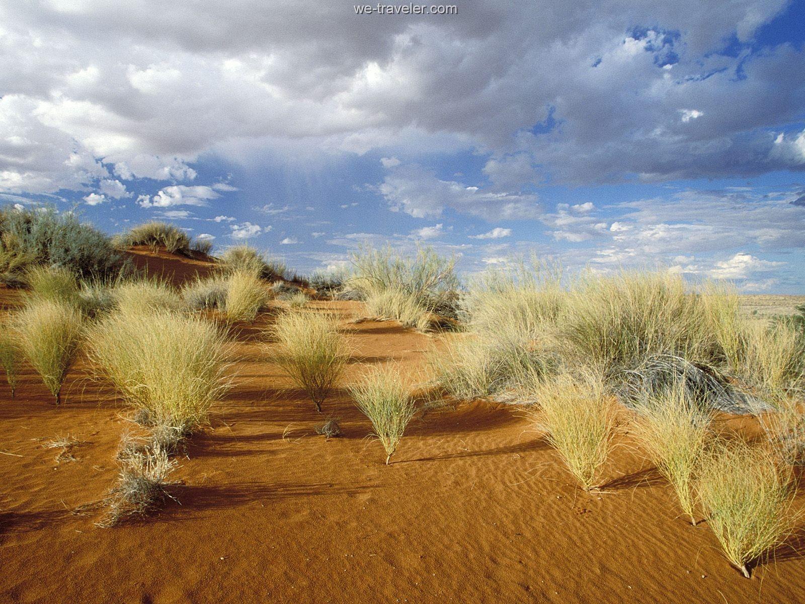 desert grasses google search desert green pinterest. Black Bedroom Furniture Sets. Home Design Ideas