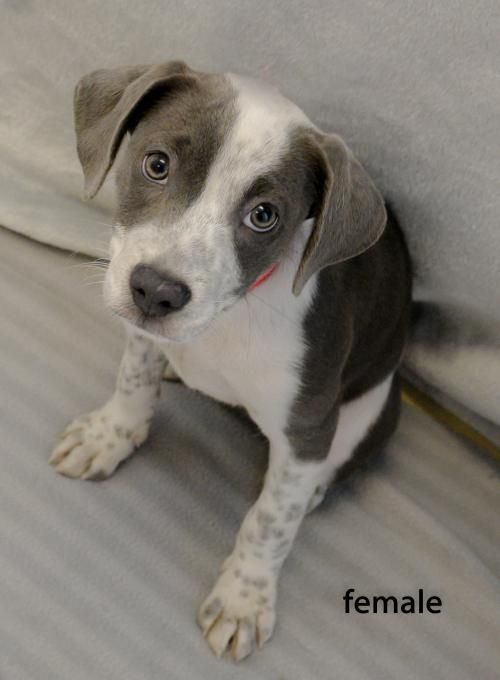 Adopt your next Pet from The Sterling Animal Shelter (With ...