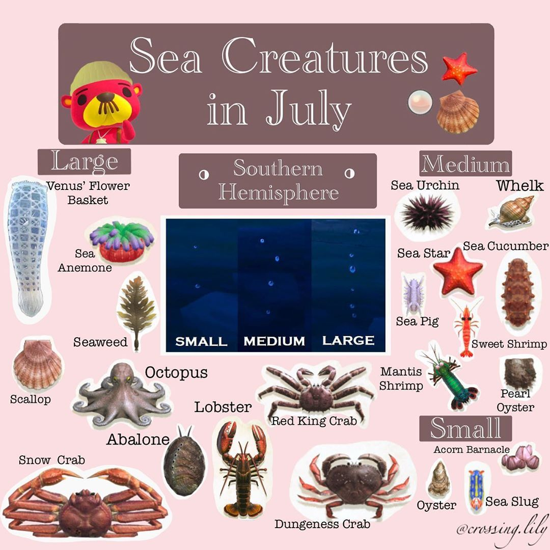 Daily Animal Crossing Cuteness On Instagram South Hemi All Sea Creatures Available By Swimming I Animal Crossing Animal Crossing Game Animal Crossing Guide