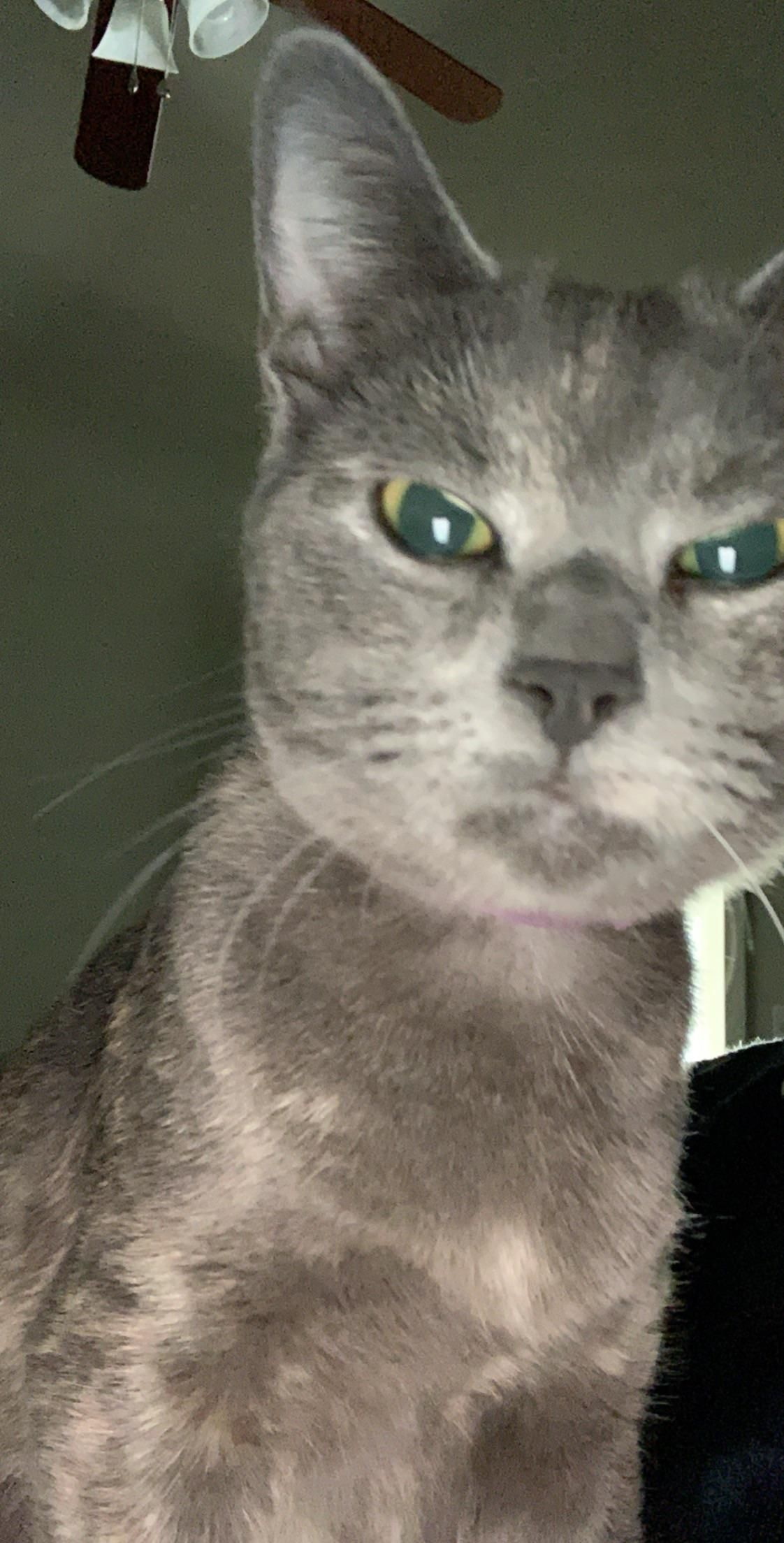 Mean Mugging Kitty is not happy about being photographed