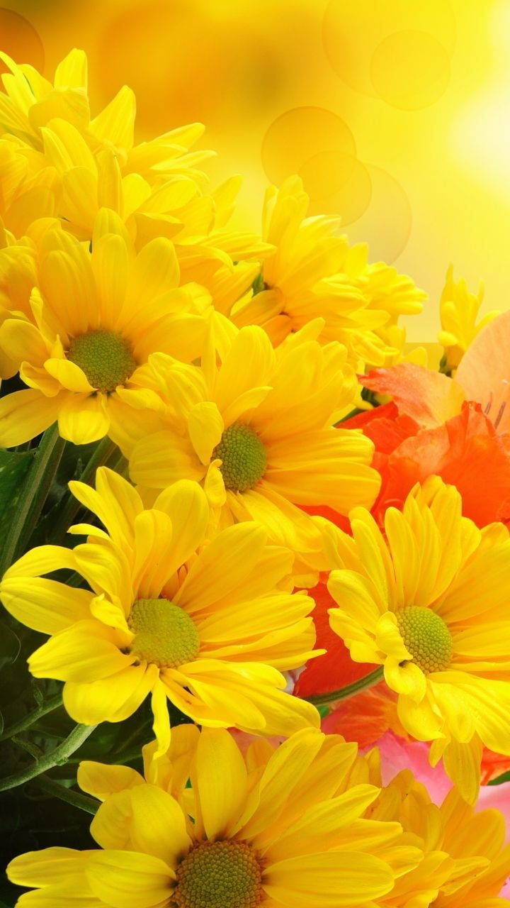 Yellow Flower Wallpaper Hd For Mobile Yellow Flower Wallpaper Yellow Flowers Flower Backgrounds