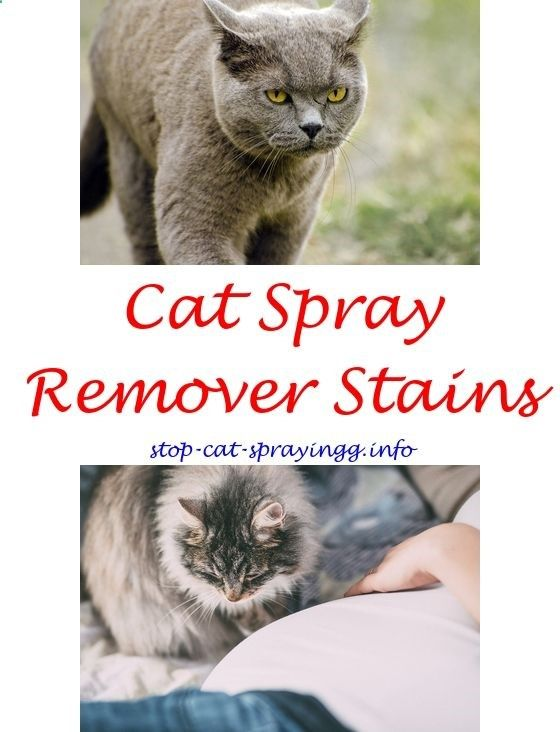 Spray to Stop Cat From Pooping On Carpet