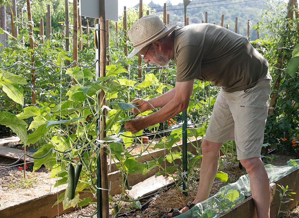Comment palisser les légumes pour gagner de la place au