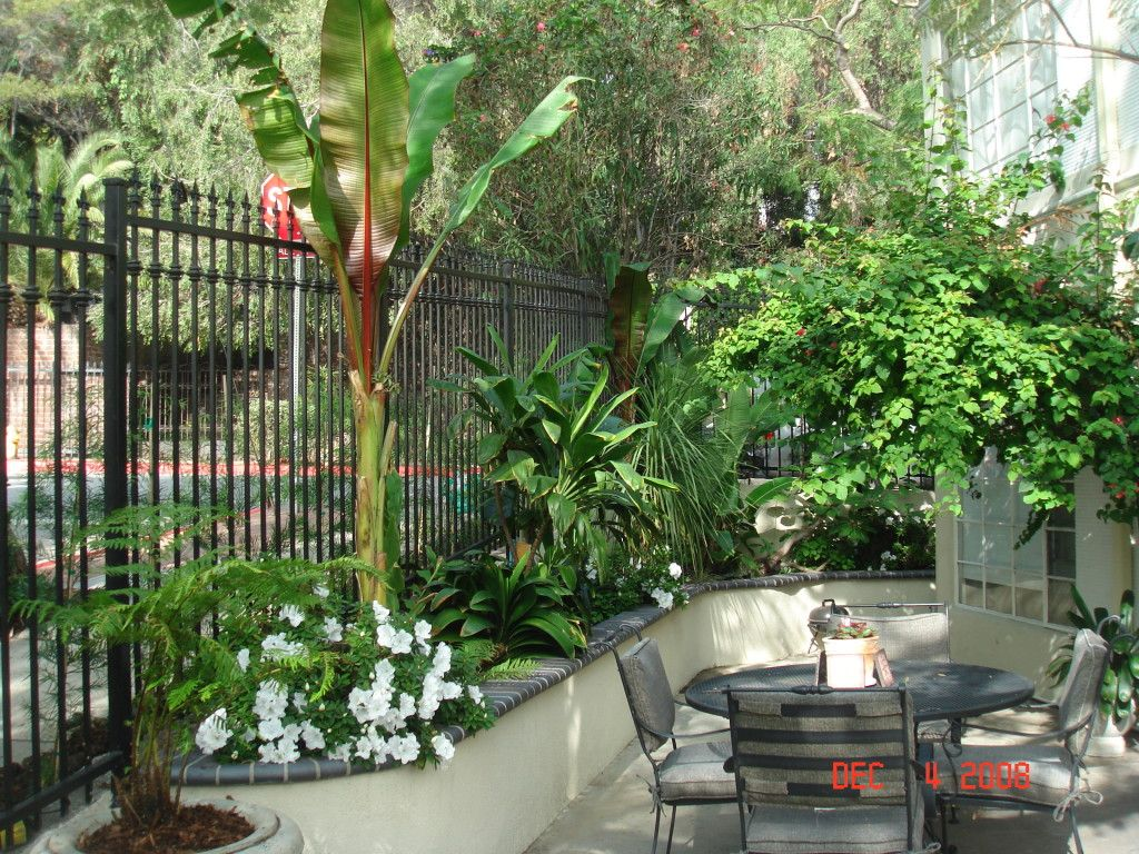 minimalist small tropical garden design not necessarily hardy in zone 8