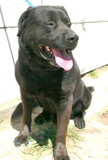 Fydor Mischling 8 Jahre Rettungshunde Lustige Hunde Und Hundebilder