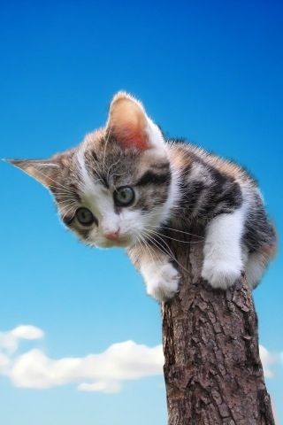 The kitten is scared