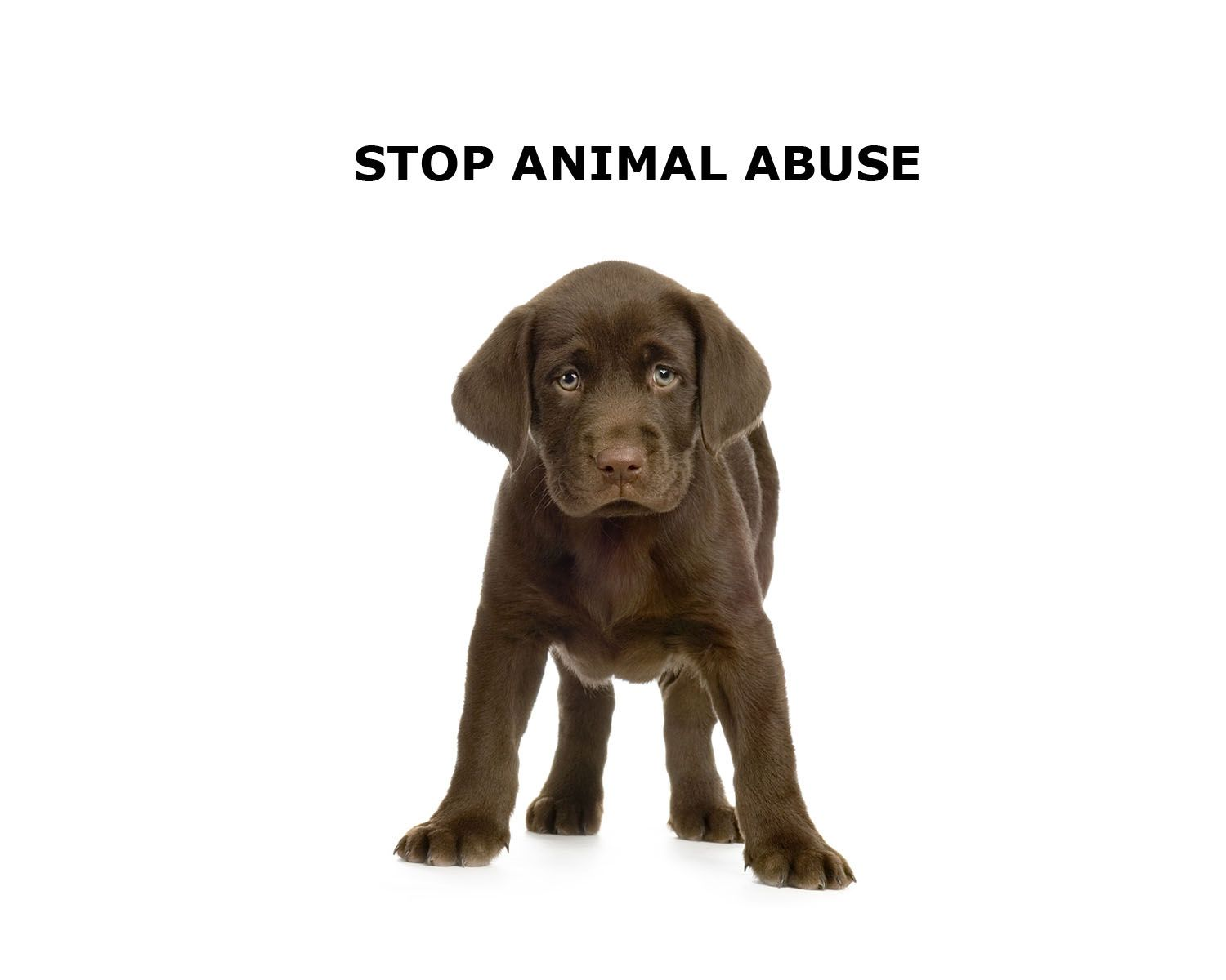 Animal Cruelty Facts and Stats