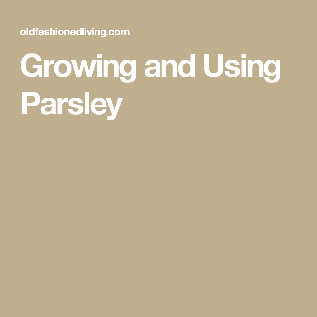 Growing and Using Parsley