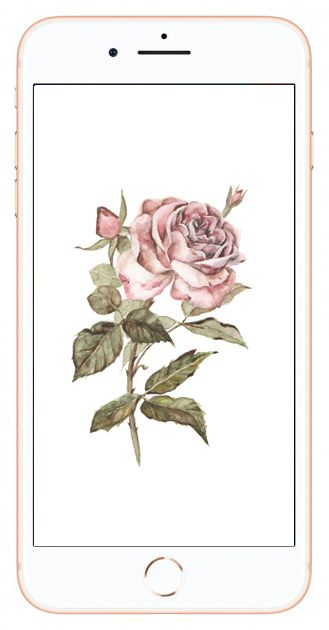 vintage style pink rose watercolor free iphone or droid screen