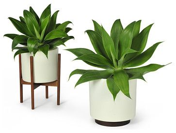 Living Room Not Tree Modernica Case Study Planter W Plinth White Modern Indoor Pots And Planters