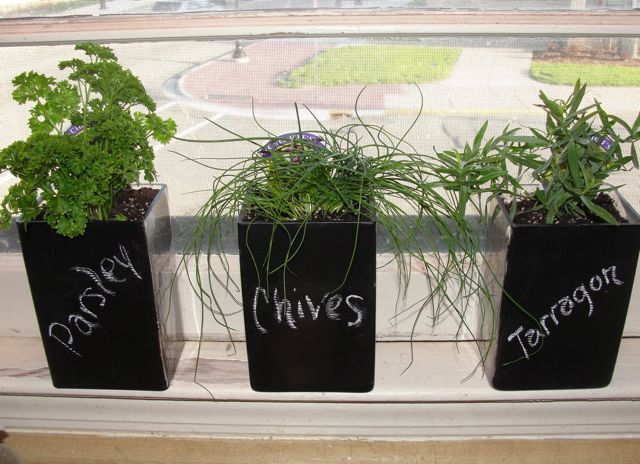 Indoor herb garden chalkboard paint on glass vases for Indoor gardening made easy