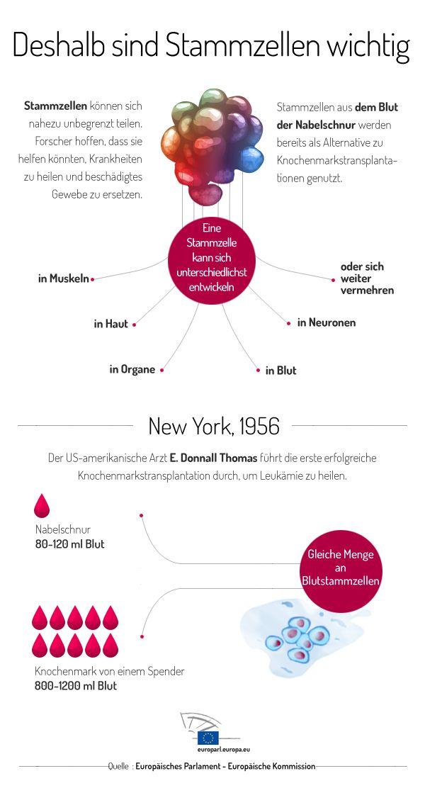 Stammzellen Spenden Gefährlich