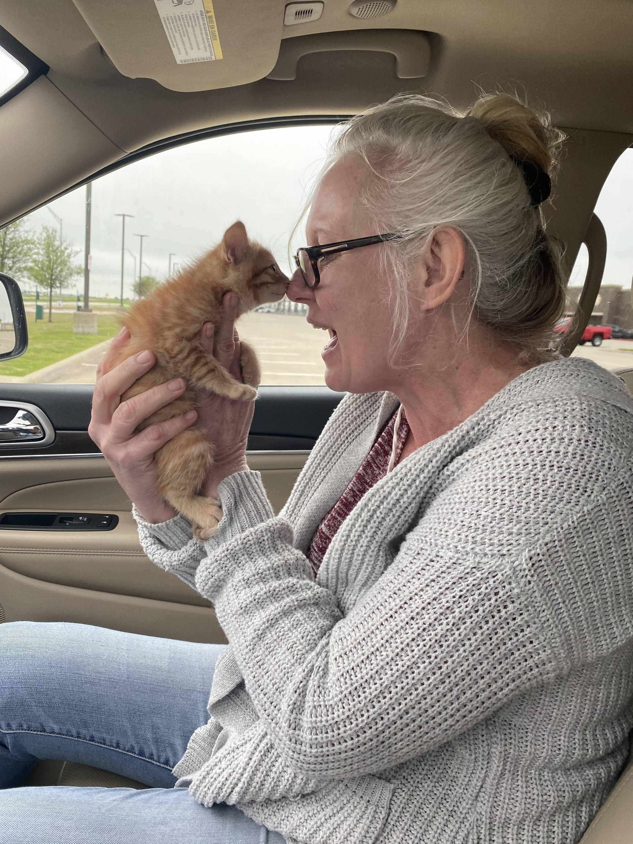 My Mom Meeting Her Dream Kitten For The First Time Today In 2020 Getting A Kitten Aww Pregnant Cat