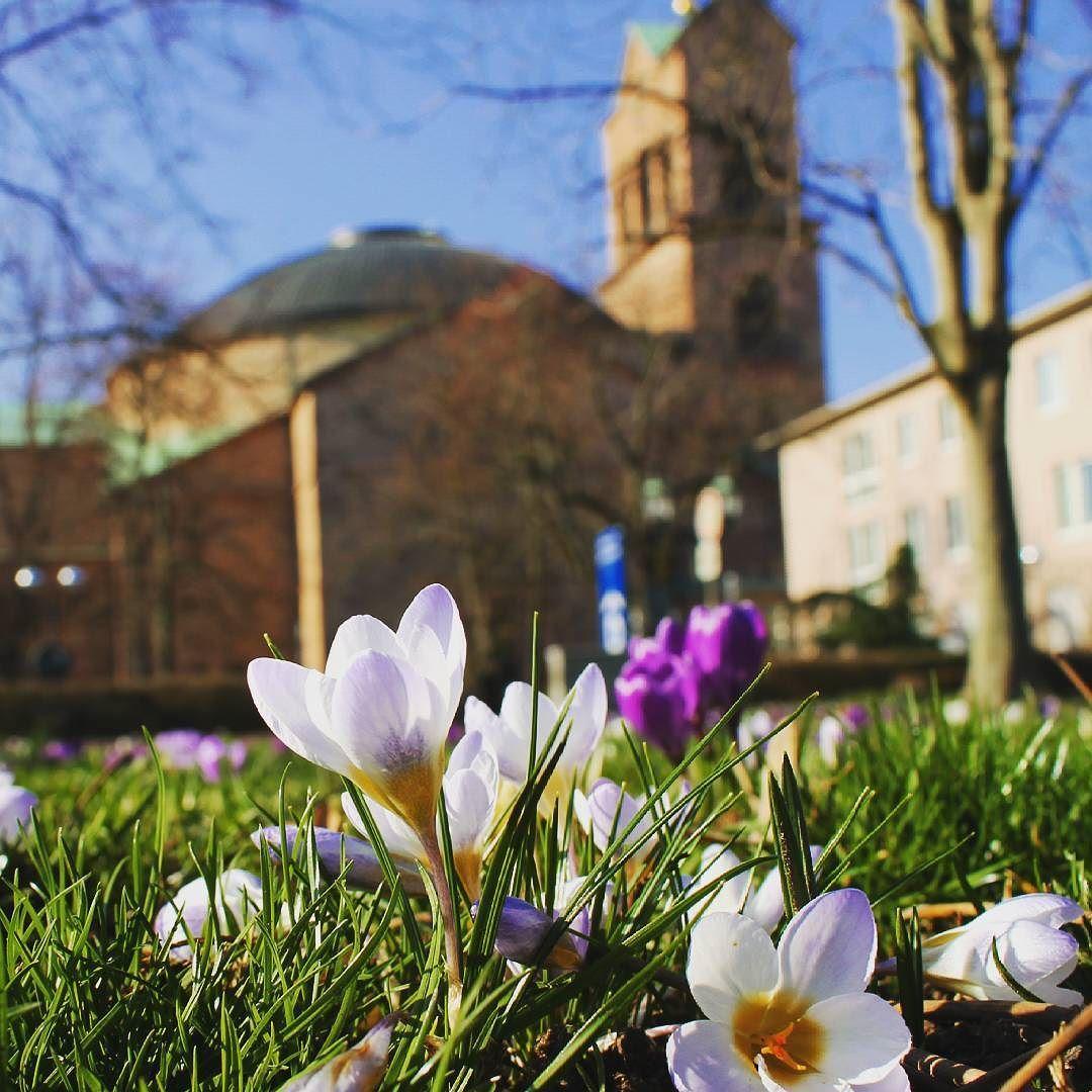 Seid ihr alle gut in die neue Woche gestartet? Hier ist noch ein Frühlingsbild zum #Feierabend!  #visitbawu #visitkarlsruhe #karlsruhe #placetobw #bwjetzt #travel #travelblog #instalike #picture #flowergram #krokusse #bluesky #spring #bestoftheday #amazing #Frühling #flower #new #germany