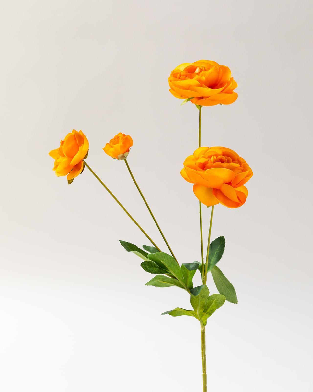 Orange Ranunculus Bunch (10 stems)