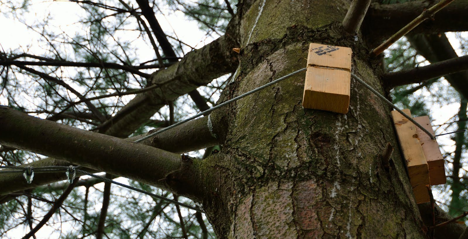 hanging up a swing between two large trees - Google Search ...