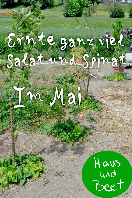 Selbstversorgung Im Mai Was Kannst Du Jetzt Ernten Haus Und Beet Gartenarbeit Gemusegarten Anlegen Selbstversorger Garten