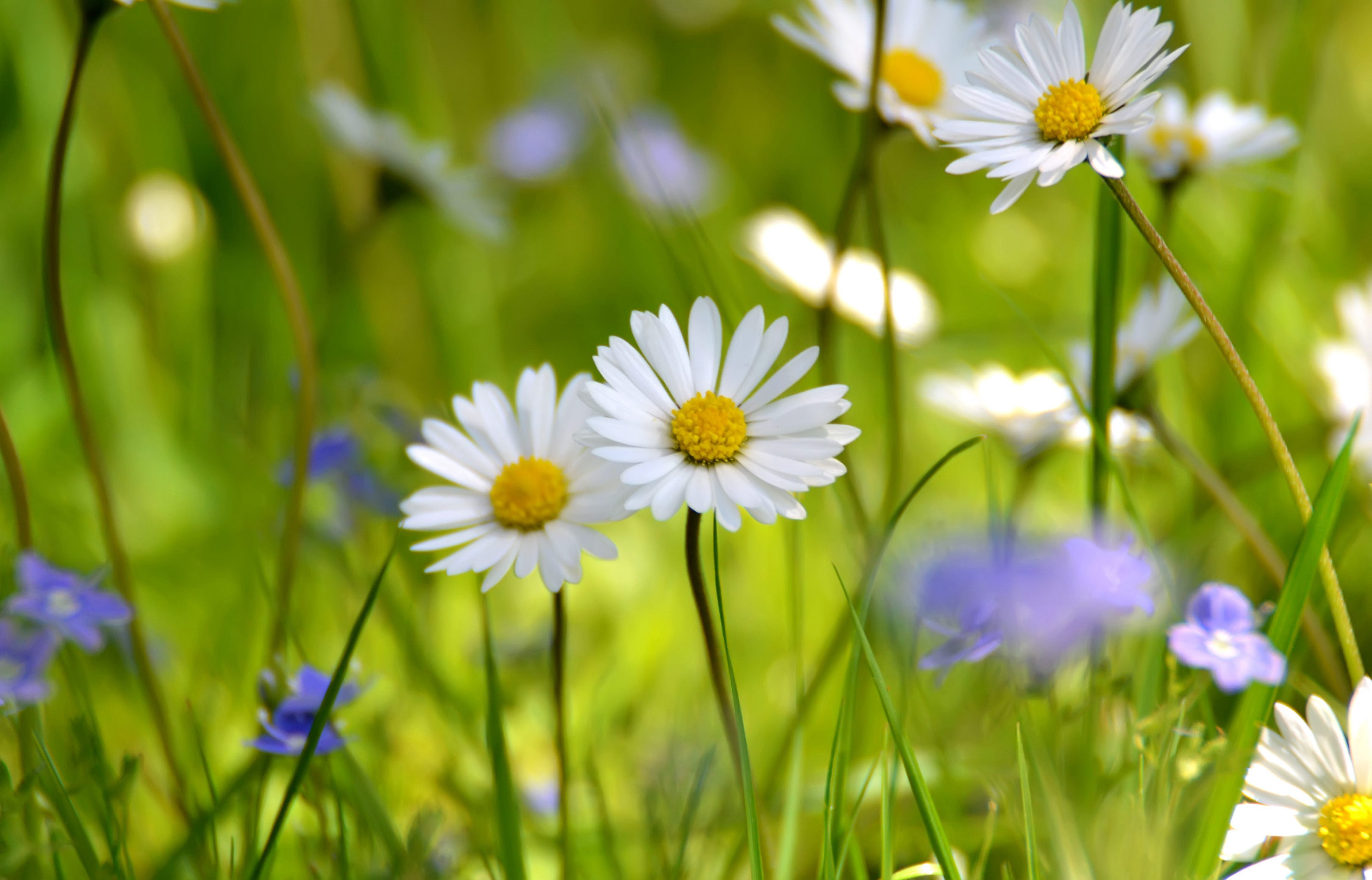 Pin by tanechka s on pinterest explore daisy field flower wallpaper and more izmirmasajfo Gallery