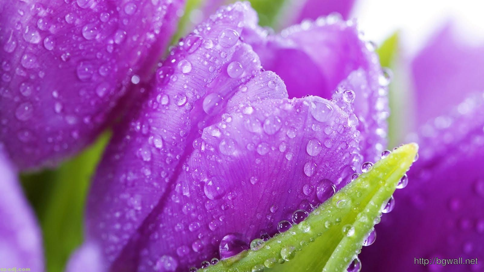 Purple Spring Flowers Wallpaper Flowers Ideas Wallpapers For