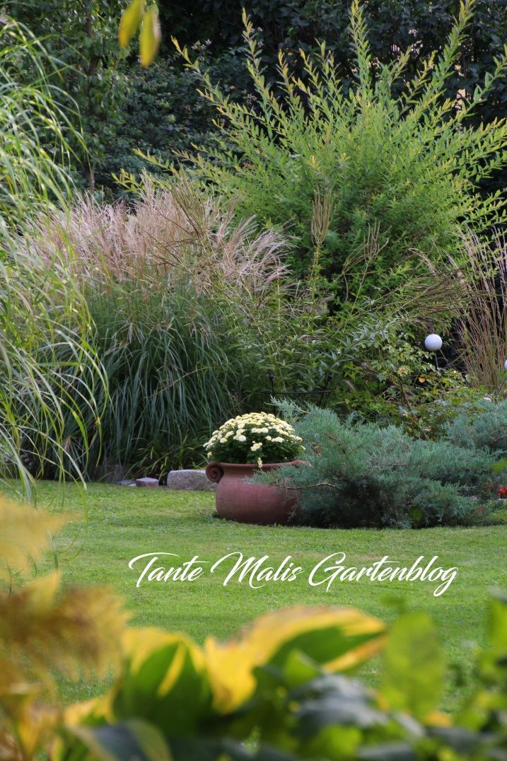 Garten Im September ziergarten im september chrysanthemen herbst gardens