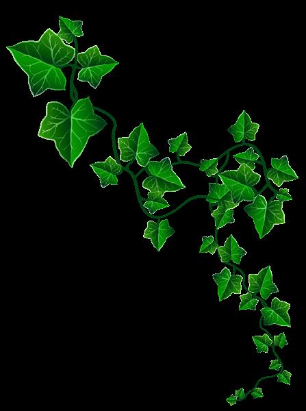Vine Ivy Decoration PNG Clipart Image | Graphics ...