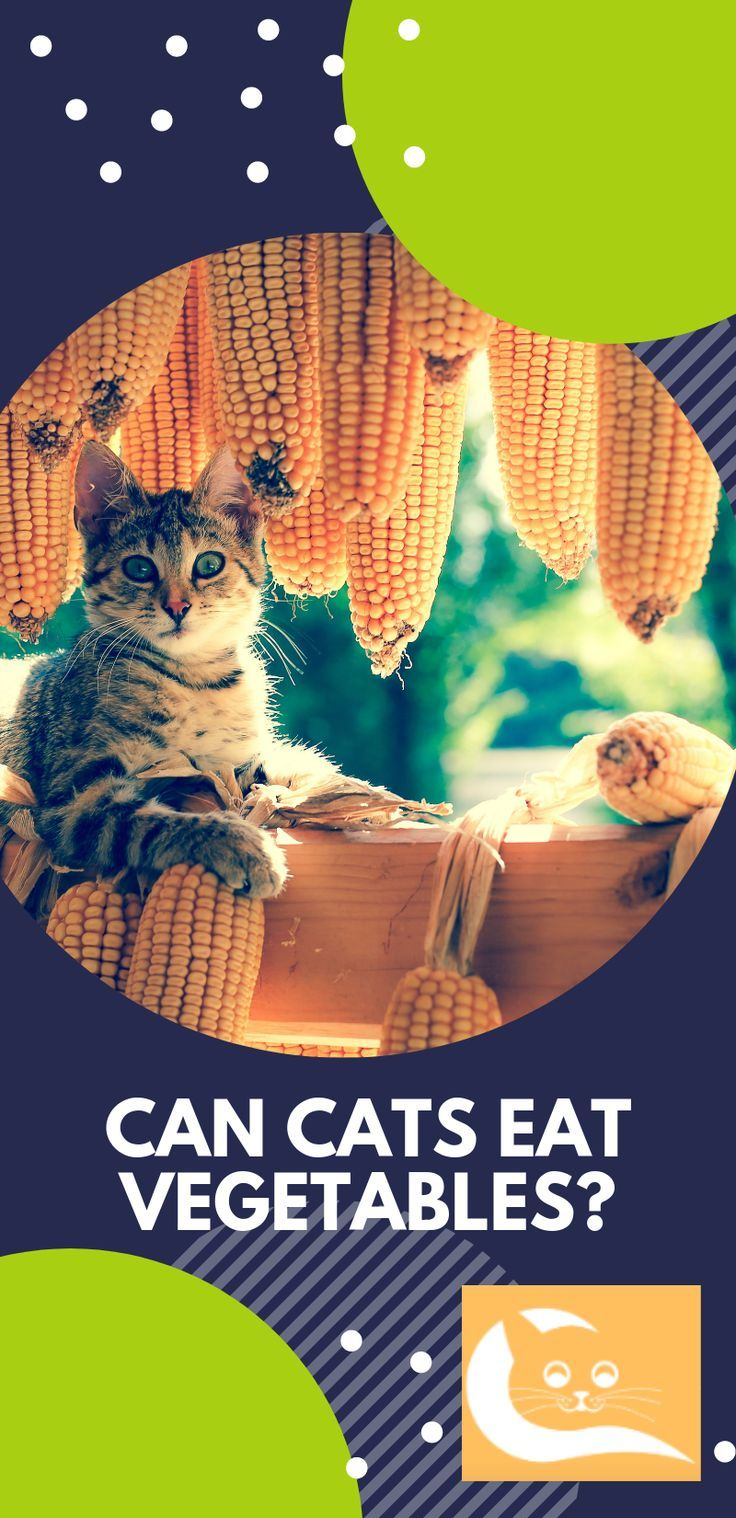 Can Cats Eat Vegetables? One of the most appreciated